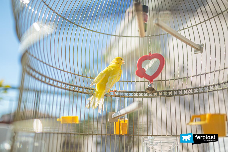 Canarino nella gabbia accessoriata di Ferplast