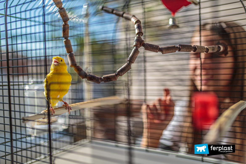 Bambina con canarino nella gabbia Ferplast