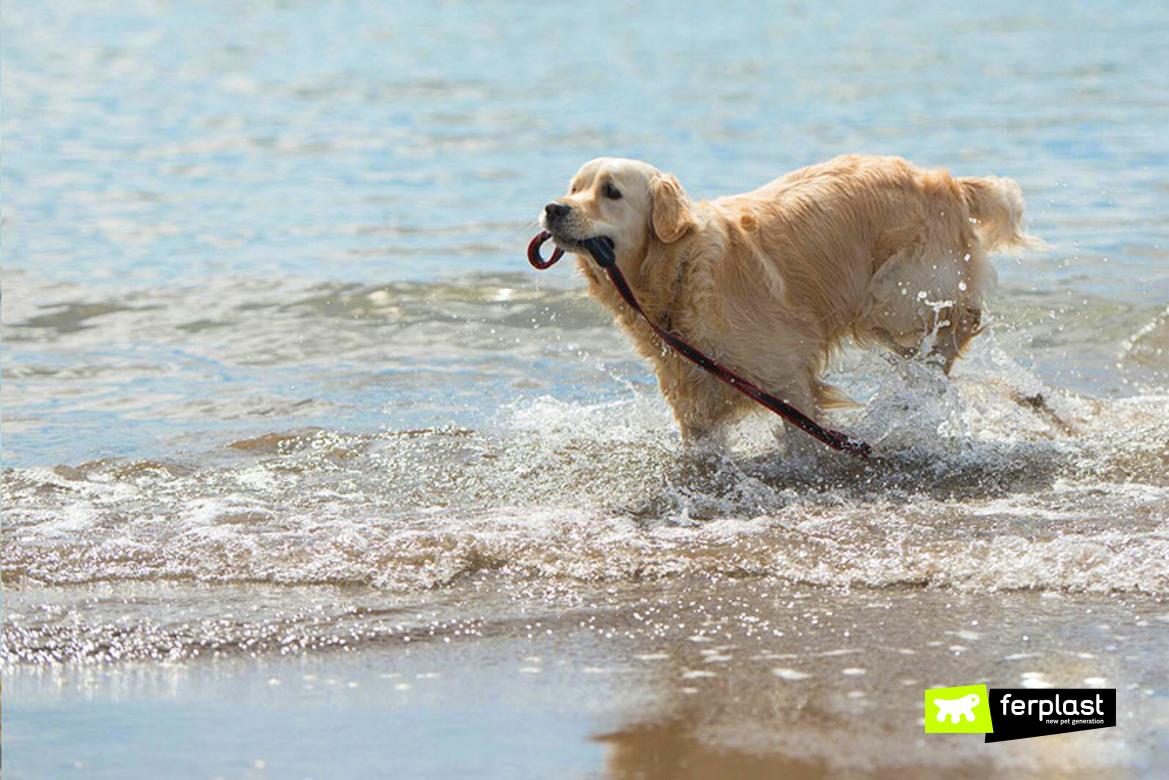 Cane che nuota al mare