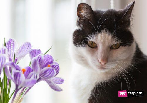 Gatto accanto a una pianta di fiori colorati