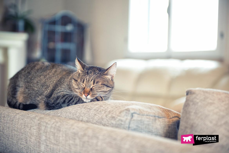 Gatto triste che dorme sul divano