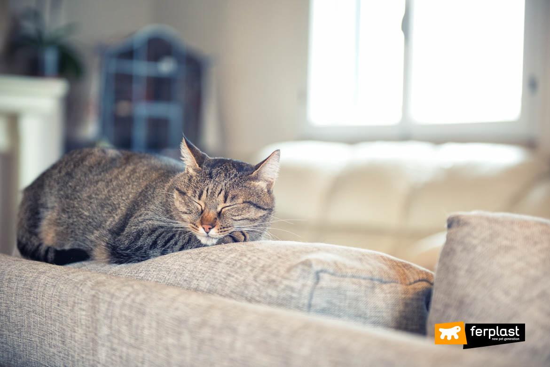 Gatto dorme sul divano