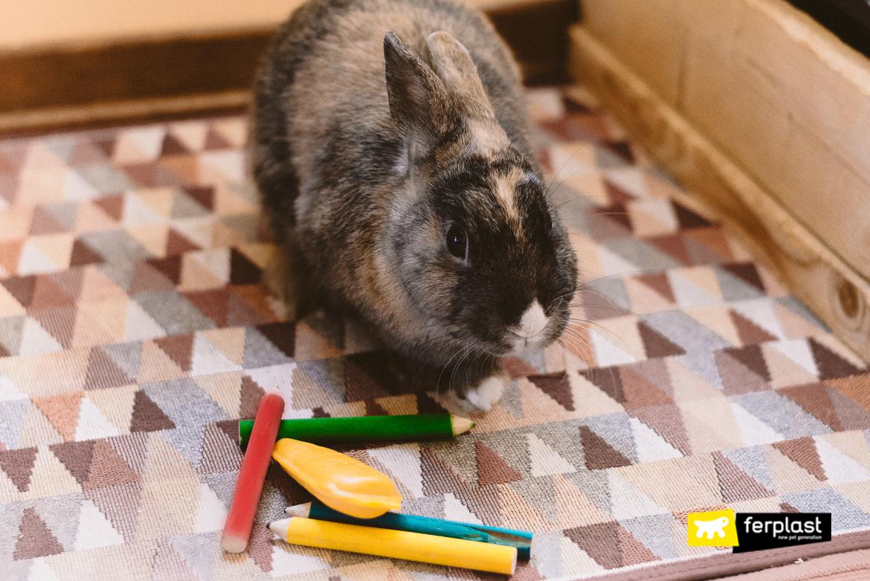 Acessorios-para-coelhos-jogos