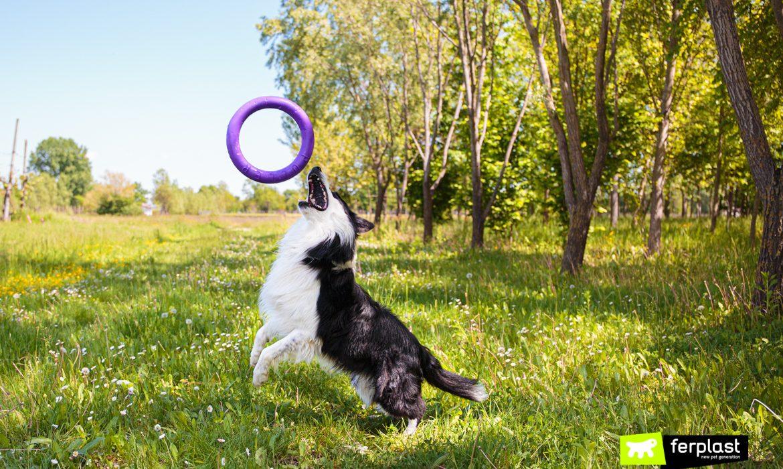 Cane gioca con Puller di Ferplast