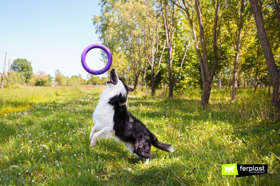 Собака играет с пуллером от Ferplast