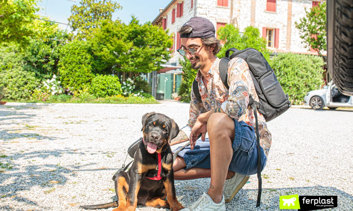 HOLIDAYS WITH YOUR PUPPY DOG: MUST-HAVE