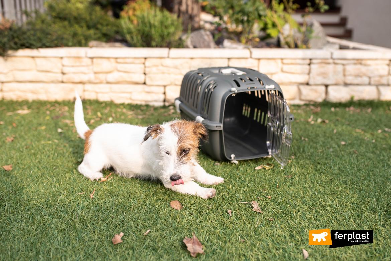 Cão-no-jardim-com-porta-animais-Ferplast-Jet