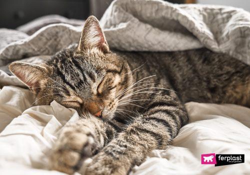 Gatto soriano mentre dorme