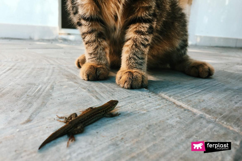 Detalhe-do-lagarto-enquanto-o-gato-olha-para-ele