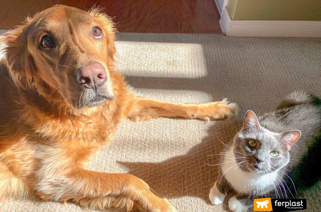 Convivenza cane e gatto: i consigli di Ferplast