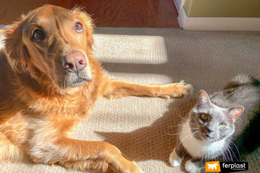Coabitação de cães e gatos: o conselho de Ferplast