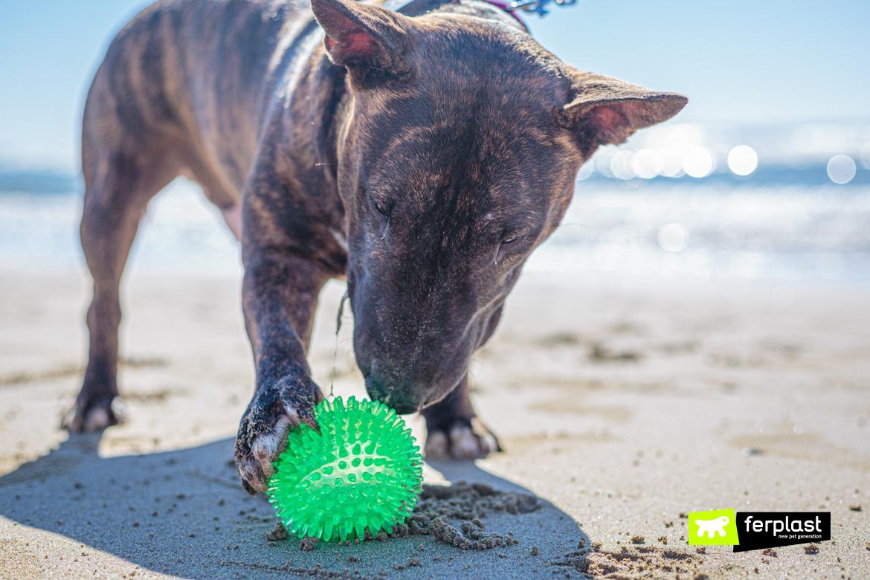 Cane gioca al mare con la palla Ferplast