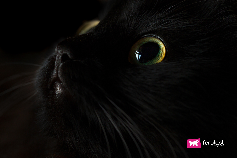 Gatto nero con gli occhi che brillano