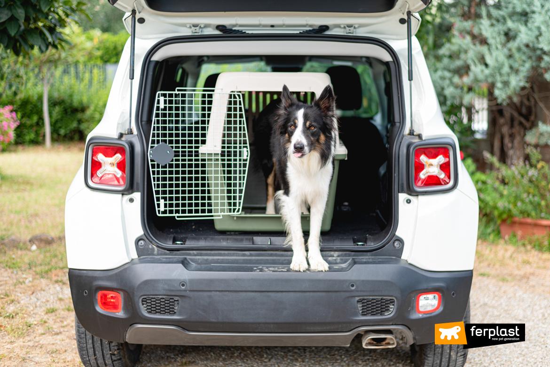 Cane nel traportino di Ferplast pronto per andare in vacanza