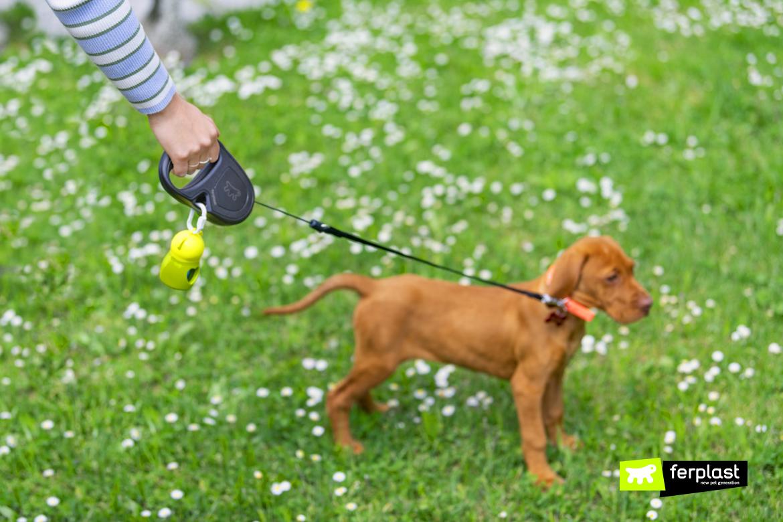 Bracco ungherese cucciolo con guinzaglio Flippy One