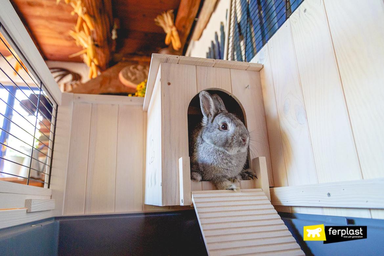 acessorios-para-coelhos-a-casa