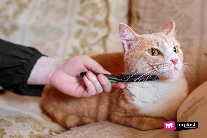 Gatto viene spazzolato con spazzola Ferplast