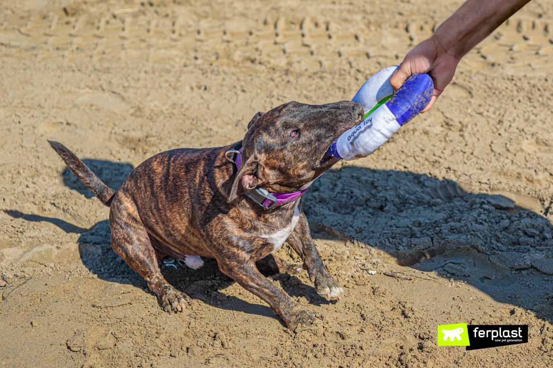 Cane gioca al mare con il salvagente di Ferplast