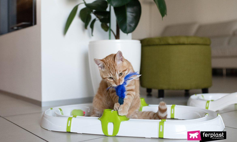Giornata mondiale del gatto: i giochi di Ferplast