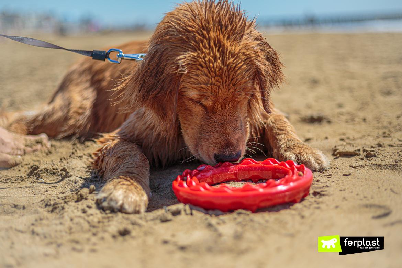 Cane gioca al mare con Smile di Ferplast