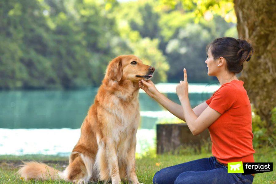 Padrona educa cane geloso e protettivo