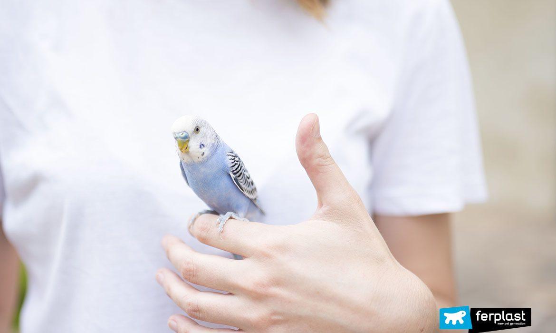 Попугай на руке хозяйки