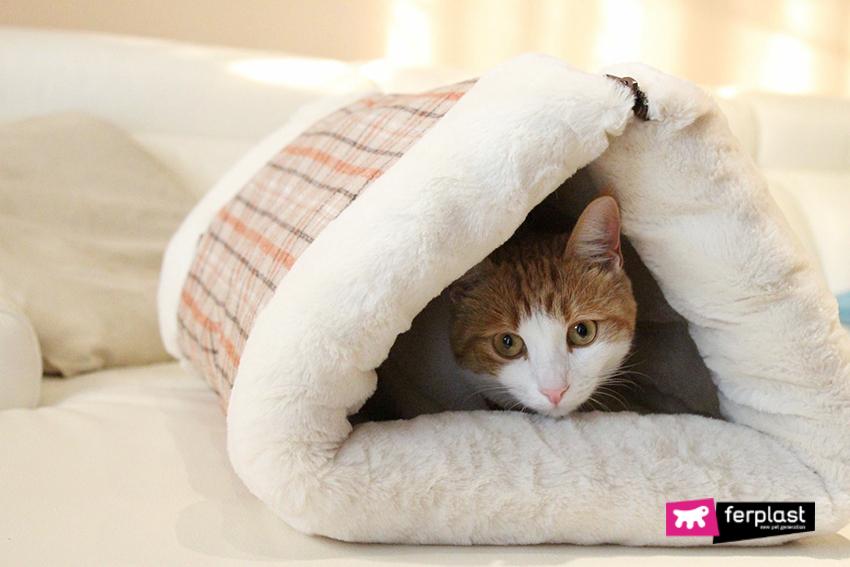 Gatto si riposa su coperta Ferplast