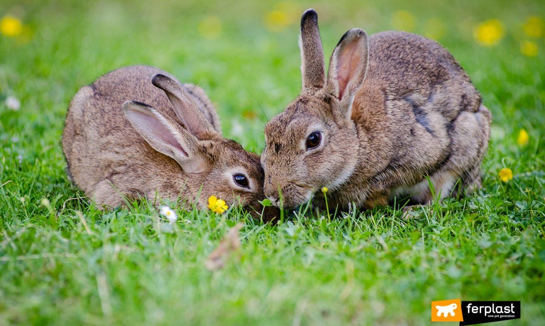 Due conigli sul prato