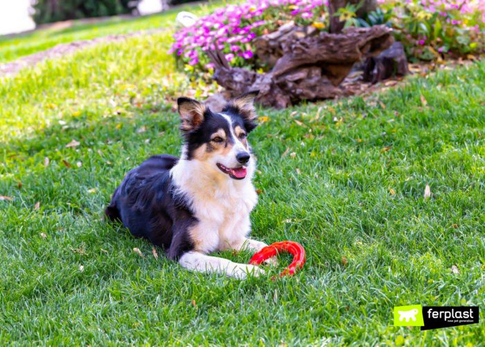 HOLIDAYS WITH THE DOG – HOW TO COPE WITH COMING BACK
