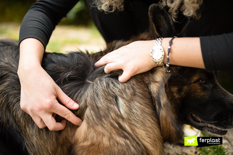 Padrona controlla che il cane non abbia le zecche
