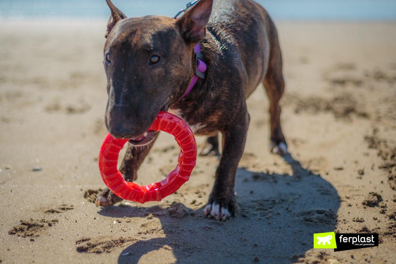 Bull Terrier al mare gioca con Smile, gioco dentale di Ferplast