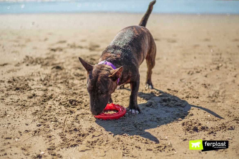 Bull terrier al mare con Smile, gioco dentale di Ferplast