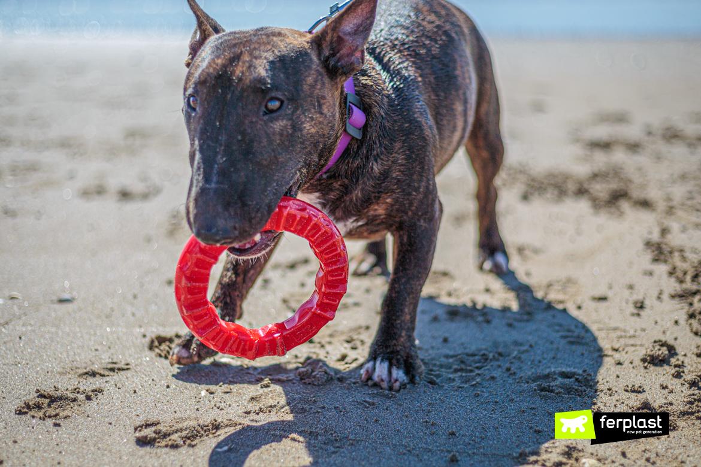 Bull Terrier Miniature gioca con Smile di Ferplast