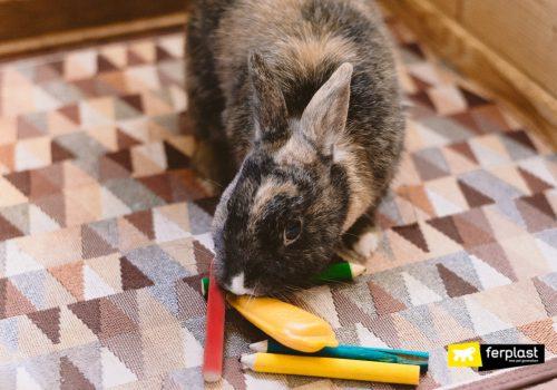 Аксессуары для кроликов: жевательные игрушки