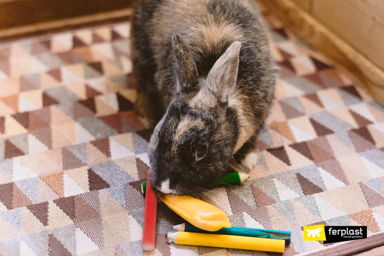 Accessori per conigli: giochi masticabili