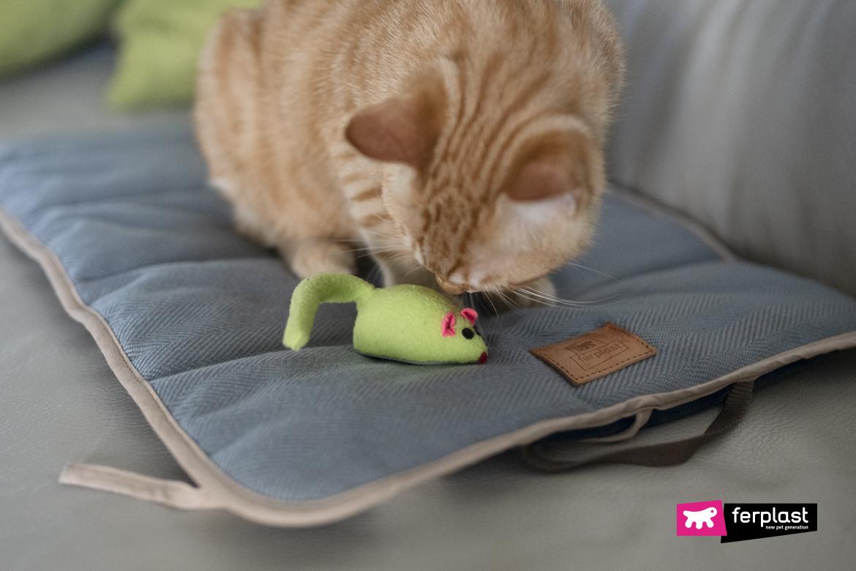 Gatto gioca con topolino giocattolo