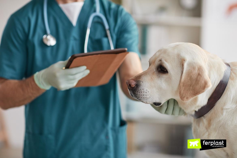 Cane dal veterinario per anchilostomi