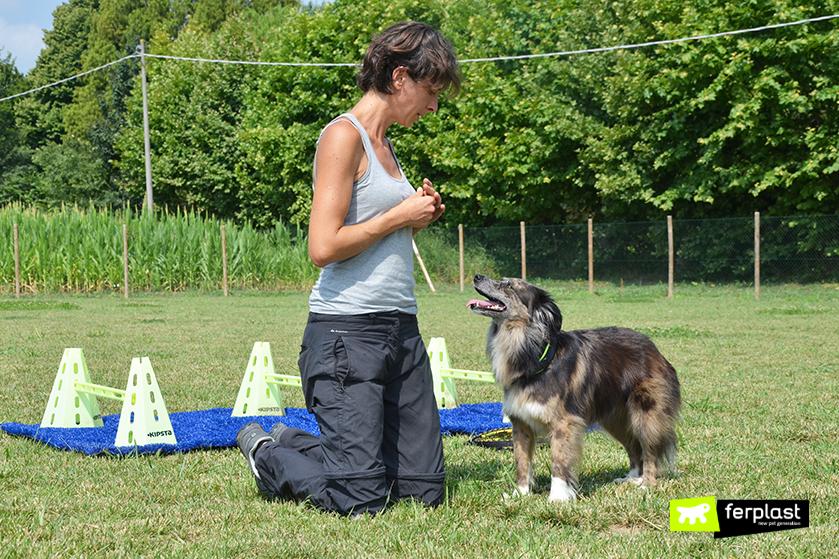 dicas_para_treinamento_de_cães_ensinar_o_seu_cão_a_ficar_de_pé_nas_pernas_traseiras
