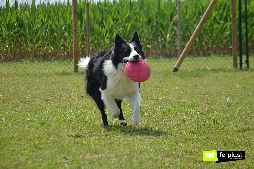benefici_frisbee_cane_padrone