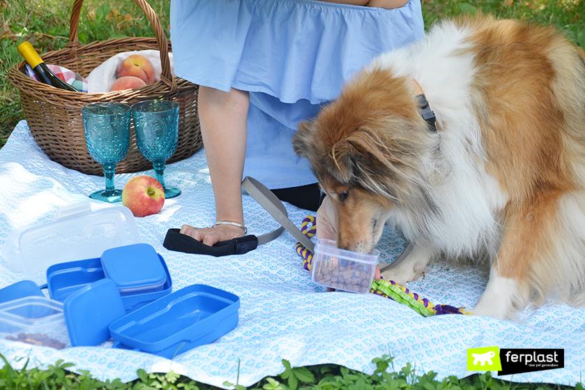 crocchette_cane_picnic_estate