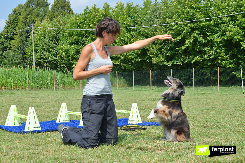 elisa_pellizzari_wedogit_vicenza_собаки