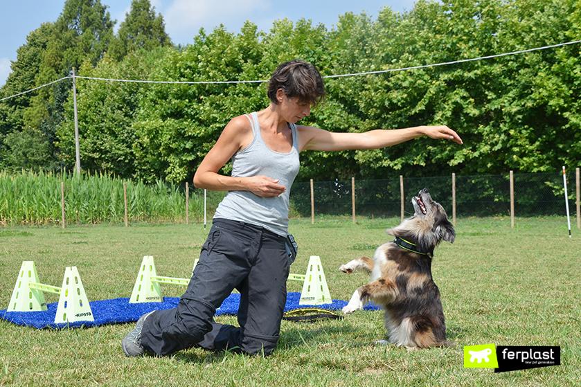 exercícios_para_cães_ensinar_o_seu_cão_a_ficar_de_pé_nas_pernas_traseiras