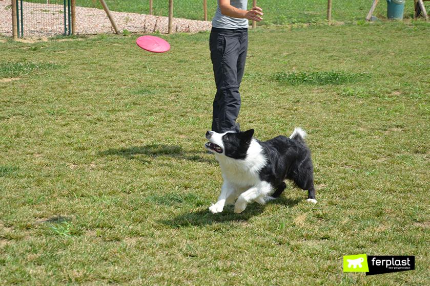 giocare_a_frisbee_con_cane_benefici