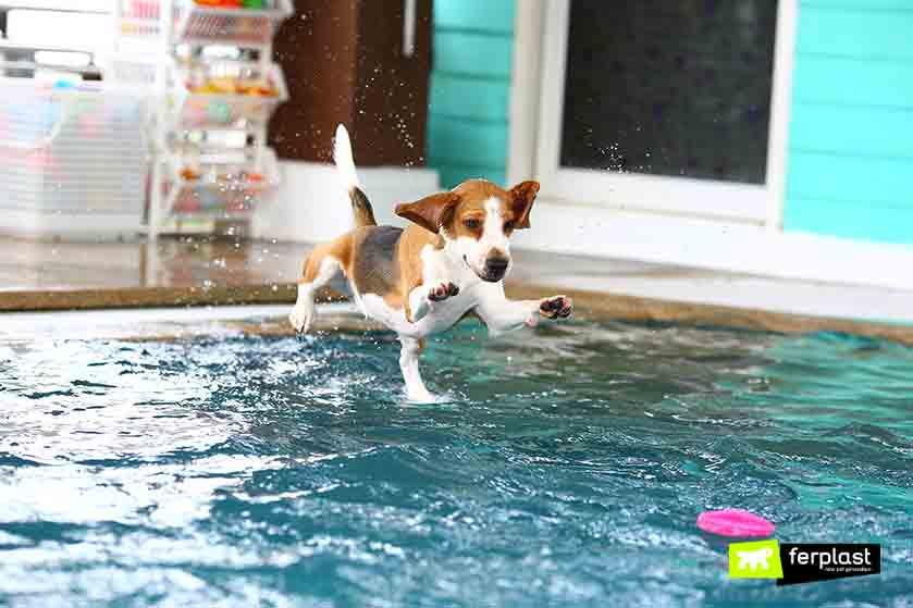 In piscina con il cane i migliori giochi acquatici per cani love ferplast - Piscina per cani ...