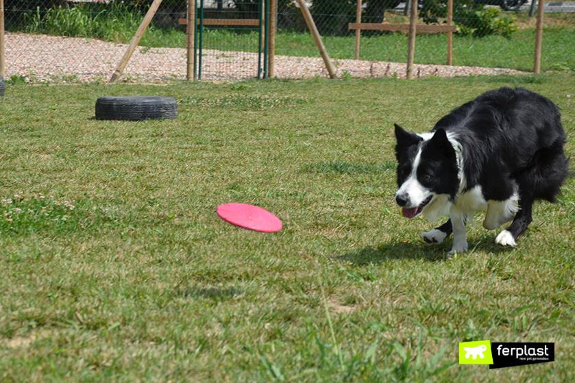 quale_frisbee_adatto_cane