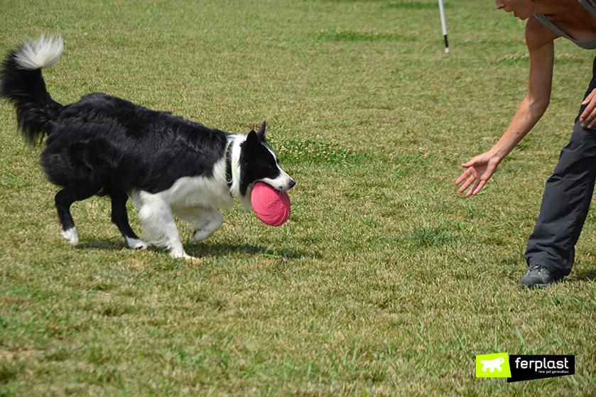 sport_gioco_cane_frisbee