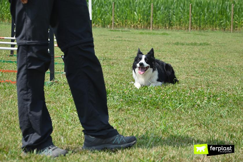 comandos_perro_sentado_explicación