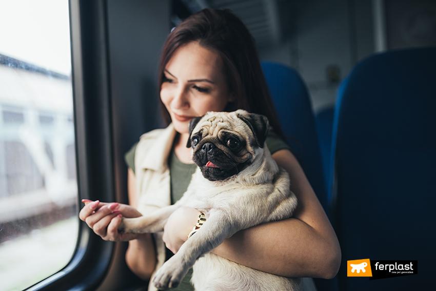 cane_città_mezzi_di_trasporto_per_animali