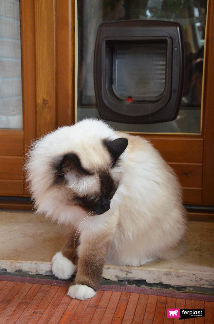 cómo_instalar_una_puerta_para_gato