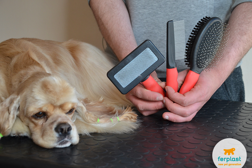 cómo_peinar_perro_pelo_largo